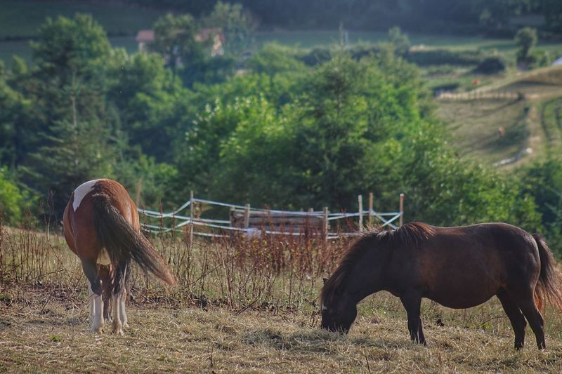 Horse Domestic Animals Animal Themes Mammal Tree Field Livestock Nature No People Standing Grazing Growth Outdoors Togetherness Beauty In Nature Full Length Grass Sky