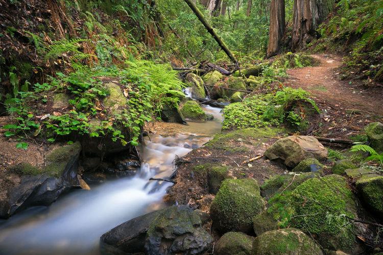 Berry Creek