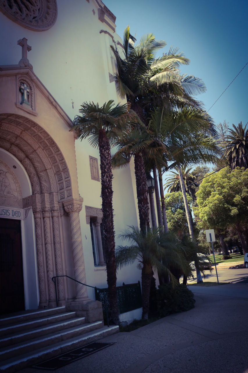 palm tree, architecture, built structure, building exterior, tree, low angle view, day, outdoors, no people, clear sky, sky