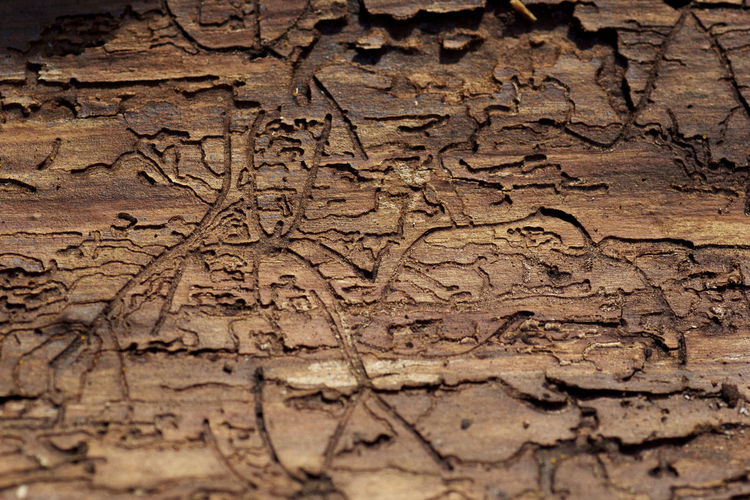 Textures And Surfaces Backgrounds Brown Color Close-up Nature No People Textured  Wood - Material