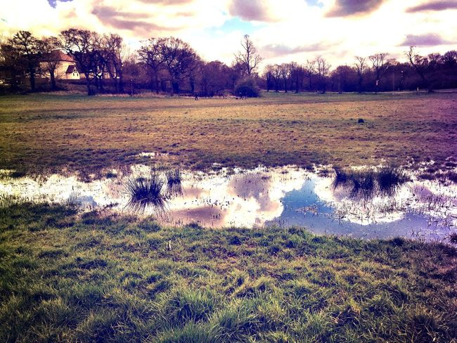 Spring Eyeemphotography Springtime EyeEm Gallery EyeEm Eyeem Market Clouds And Sky Clouds Sky And Clouds Spring Into Spring Landscape EyeEm Nature Lover Forest Trees Eppingforest Sky Blue Sky Reflection Reflections Water Reflections Water