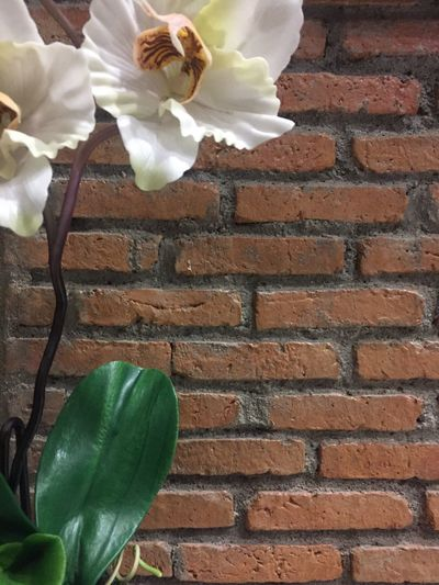 brown brick wall and flower decoration. Flower Brick Wall Growth No People Plant Beauty In Nature Wall - Building Feature Textured  Textures And Patterns Textures And Surfaces Brick Wall Vintage Decorative Plants Freshness