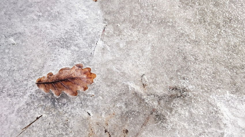 High Angle View No People Close-up Day Textured  Leaf Outdoors Nature Travel Destinations Beauty In Nature Winter Snow Macro Photography Ice White Background Snowing