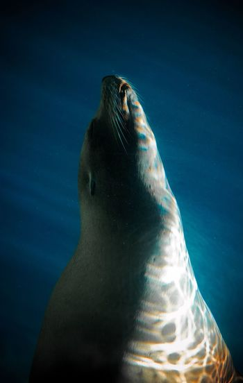 Seal Portrait Aquarium Sealife Seal Underwater Swimming Sleeping Water Illuminated