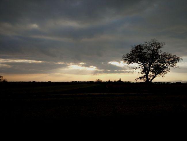 Burgenland Landscape Field Tree Cloud - Sky No People Outdoors Autumn