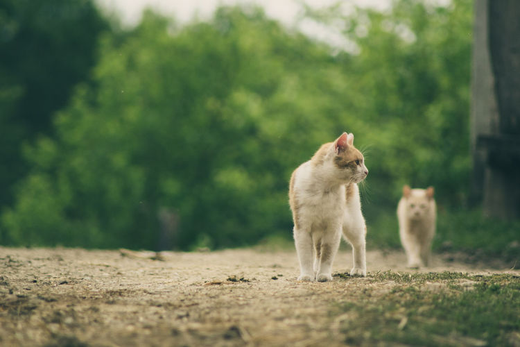 Stray cats walking on field against trees
