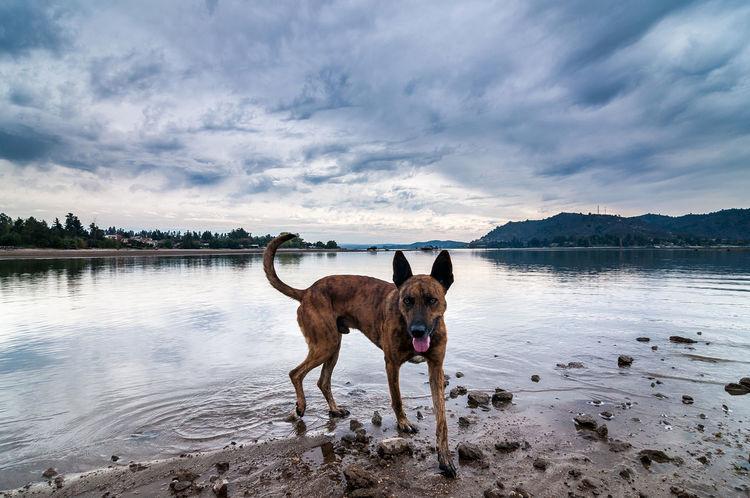 Lake Dog #dog #doglover #lagorapel Animal Beauty In Nature Canine Lake Nature Water