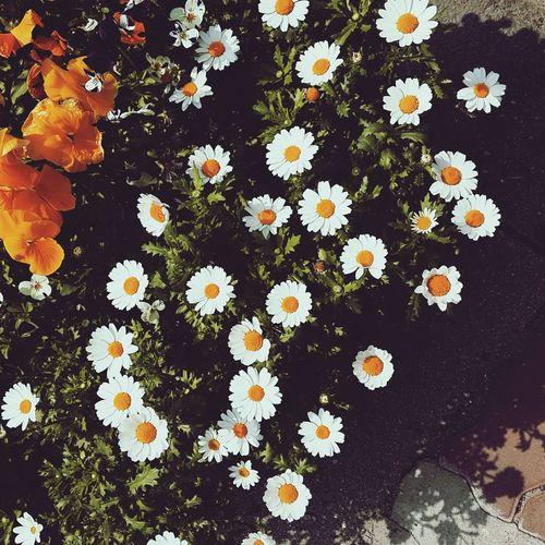 여름이 코앞 Spring Into Spring Spring Flowers