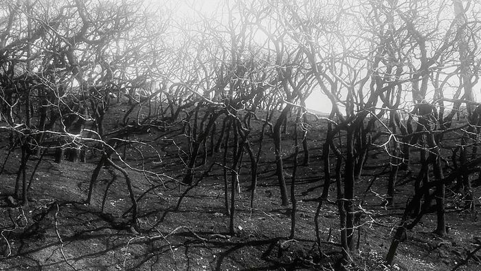 Tree Bare Tree Outdoors Woodland Fire Skeleton Trees Ogden Wasatch Front
