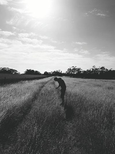 Braestead times First Eyeem Photo Country Life Hay Grass Dry Grass Dry Land Murray Valley Barossavalley Summer South Australia Australia Farming Farm Life Riverland