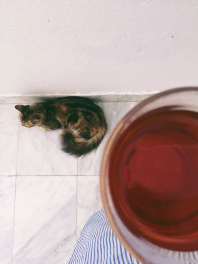 My cat & tea 🍂 Check This Out Taking Photos Enjoying Life IPhoneography IPhone Cat Love Tea Popular EyeEm