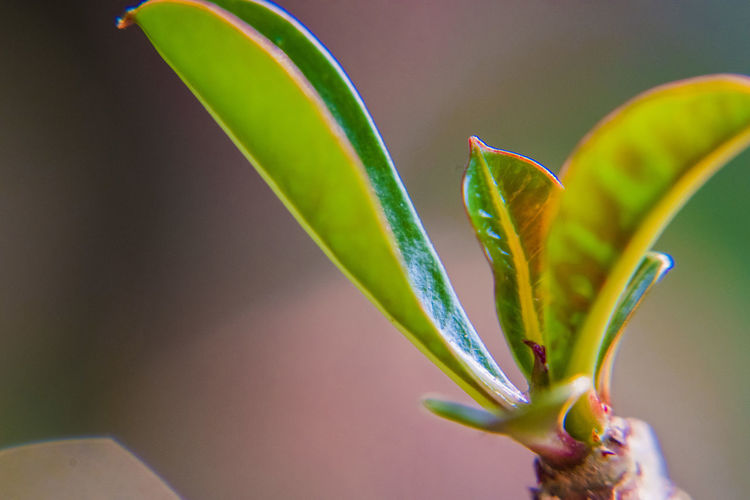 Leaves Plant Growth Close-up Freshness Beauty In Nature Flower Nature Green Color Plant Part Leaf Flowering Plant No People Vulnerability  Selective Focus Fragility Outdoors Beginnings Food Focus On Foreground Day
