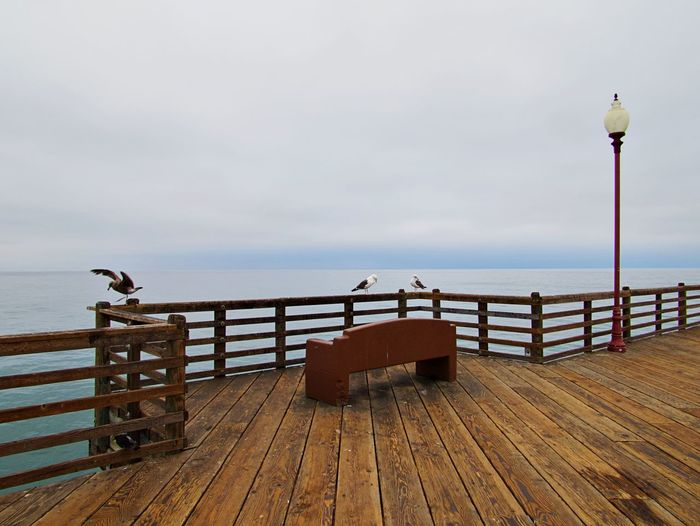 Seagull on wooden pier over sea against sky