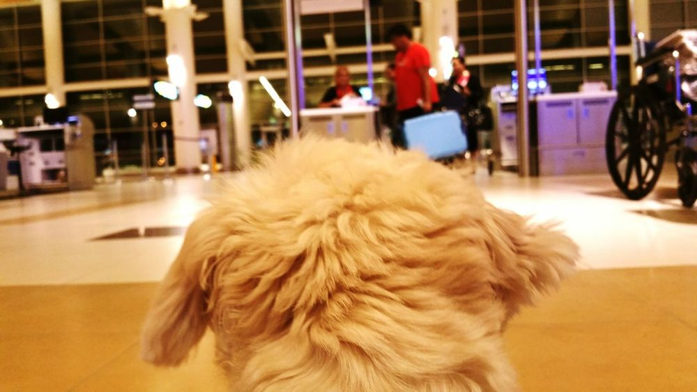 Checking In Let's Go Leaving On A Jetplane Puppy ShiTzuForever🐶 Dogs View Airport Airport Waiting Airportphotography Airport Terminal Airport Photography Break The Mold