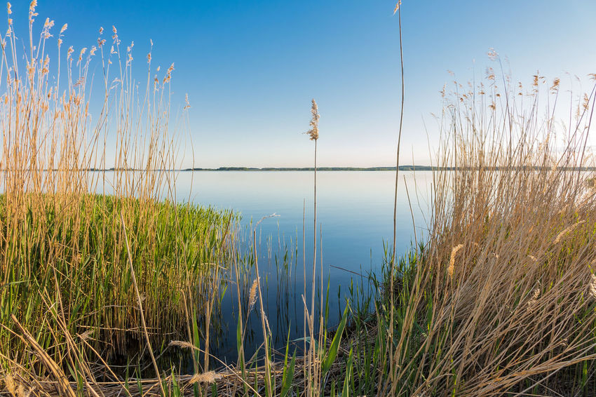 Backwater on the island Usedom in Zempin, Germany. Achterwasser Beauty In Nature Blue Day Grass Growth Lake Landscape Nature No People Outdoors Plant Reeds Scenics Sky Tranquil Scene Usedom, Germany Water Zempin Usedom Ostsee