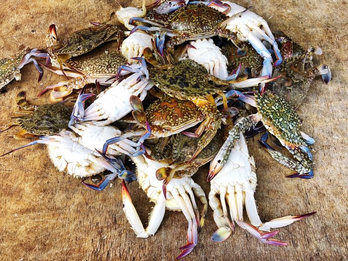 Fish Market Uncooked Seafoods Pawn High Angle View Animal Animal Themes Animal Wildlife Close-up Sand Land No People Beach Nature Animals In The Wild Directly Above Outdoors Insect Marine