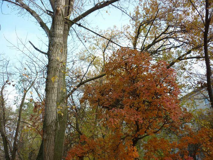 Осень в Волгограде