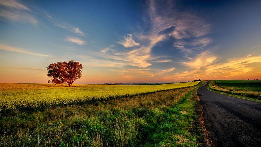 Street Amidst Grassy Field Against Sky