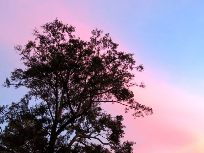 October is cancer awareness. So show your pink photos. Nothing better than nature giving the world a shot of her pink. Tree Low Angle View Nature Sky Clear Sky Beauty In Nature Growth Outdoors No People Branch Tranquility Sunset Day Scenics