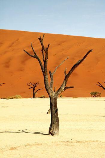 Bare tree on desert