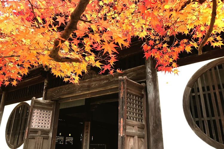 Tree Autumn Leaf Low Angle View Change Built Structure Branch Outdoors Architecture No People Building Exterior Day Nature Beauty In Nature Autumn Red History Temple Beauty In Nature