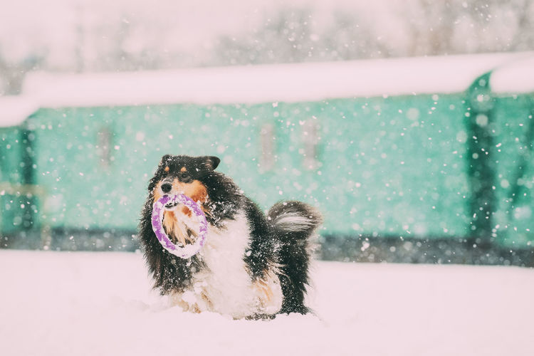 View of a dog in snow