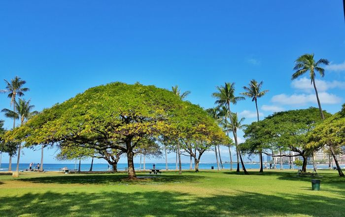 Green TreePorn Vacation Hawaii Oahu Travel Photography Waikiki Check This Out Solo Traveler!