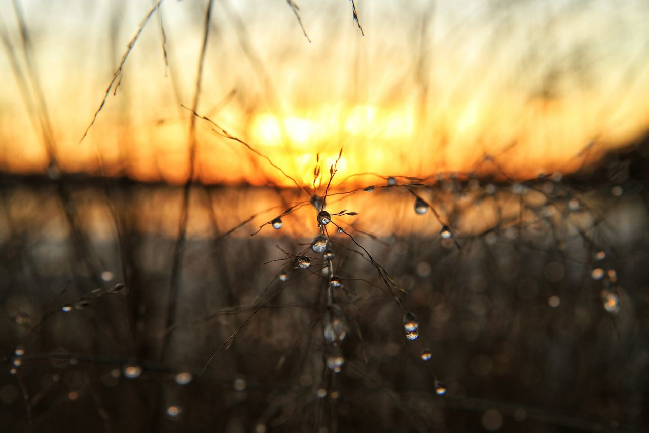 Close-Up Of Water Drops On Plants Growing At Field During Sunset