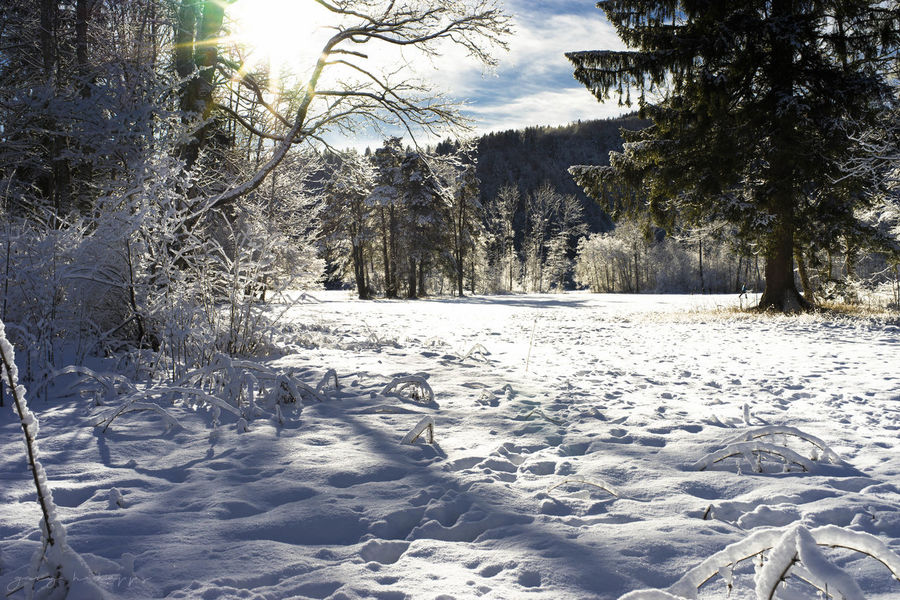 Welcome back, Winter Allgäu Alps Füssen, Bayern, Deutschland Nature Nature Photography Beauty In Nature Branch Cold Cold Temperature Day Germany Landscape Nature No People Outdoors Scenics Shadow Sky Snow Sunlight Tranquil Scene Tranquility Tree Weather White Color Winter