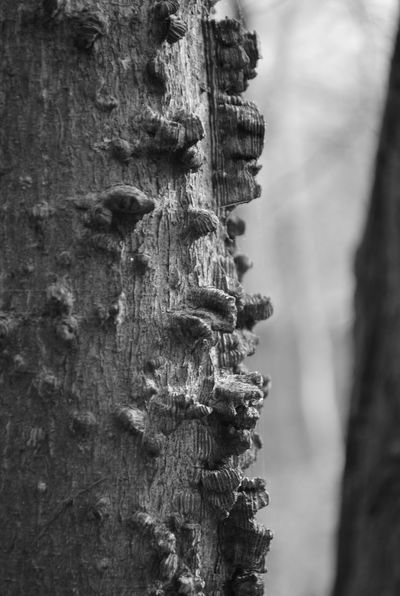 Blackandwhite Details Natural Pattern Pattern Rough Surface Texture Tree Trunk Wood