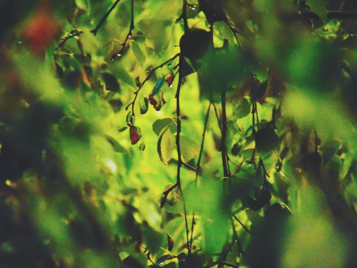 Green Color Close-up Plant Water Nature No People Beauty In Nature UnderSea Leaf Growth Branch Freshness Tree Outdoors Day окно в мир Nature Рязань Houses Rain☔ Rainy Days☔ RainyDay Rainy Days Life Green Color