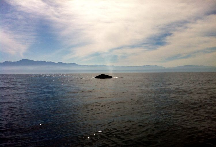 Whale Watching Beautiful Humpback Whale Amazing Ocean Mexico Traveling An Eye For Travel