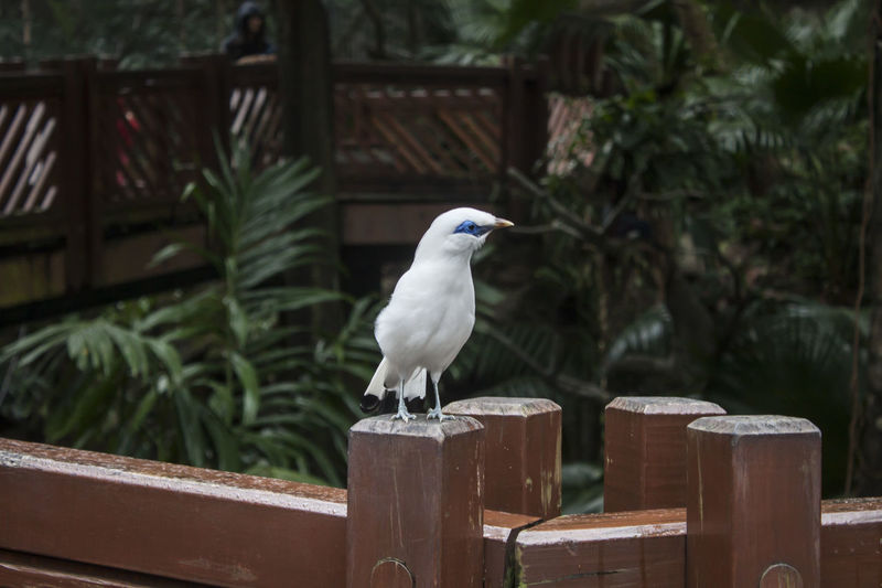 Animal Themes One Animal Bird Animal Vertebrate Plant Wood - Material Nature No People Day Focus On Foreground