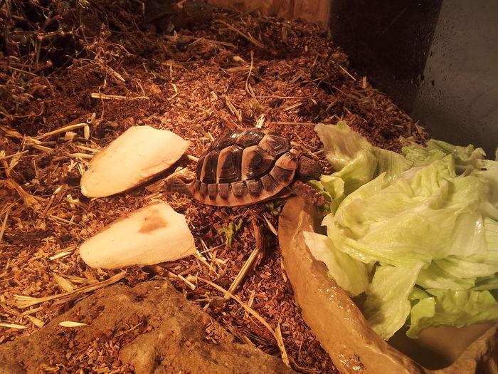 #Bowser #Cooper #Greek #Greek Tortoises #Haustier #Nature  #pet #Schildkröte #turtle #Turtles
