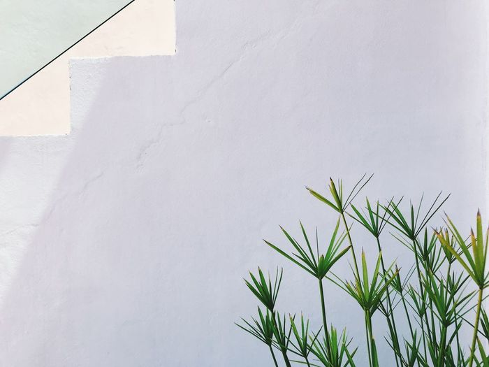 Growth Plant Day Nature Wall - Building Feature Green Color No People White Color Architecture Built Structure Outdoors Beauty In Nature Close-up Leaf Low Angle View Plant Part Building Exterior Copy Space Winter Tranquility
