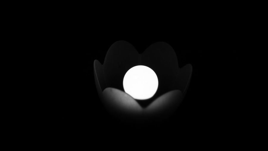 Artificial Flower Black And White Black Background Close-up Glowing Illuminated Indoors  No People
