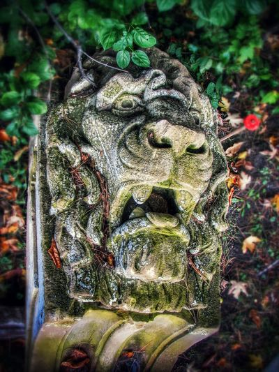 Dramatic Lionhead In The Garden Garden Art