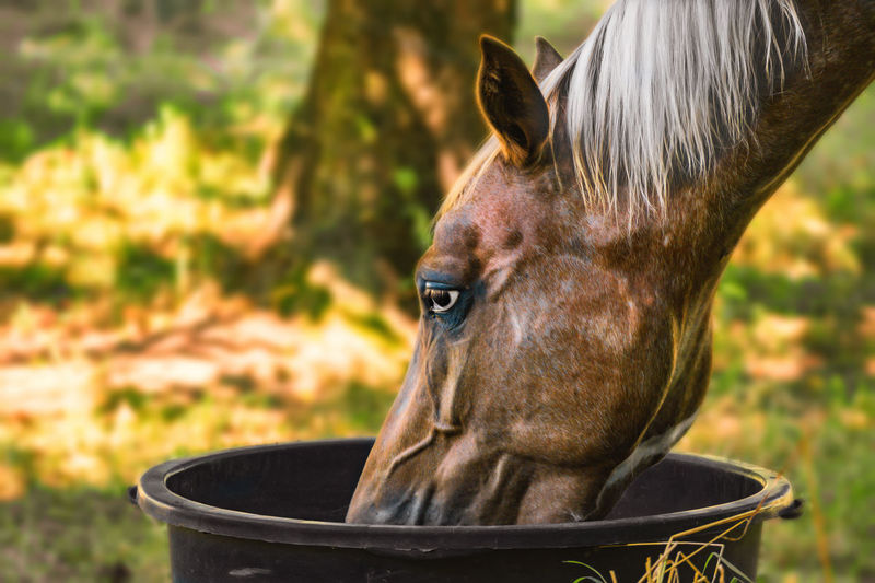 Animal Animal Body Part Animal Head  Close-up Day Drinking Focus On Foreground Horse No People Outdoors Portrait Portraits Thirsty