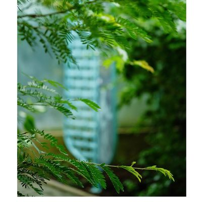 Nature Leaf Green Color Outdoors Plant No People Focus On Foreground Day Close-up Tree Summer Freshness Beauty In Nature Palm Tree Fujifilm_xseries Fujinon 60mm Naturephotography Macro Nature Macro Photography Macroclique Nature Beauty In Nature Macronature
