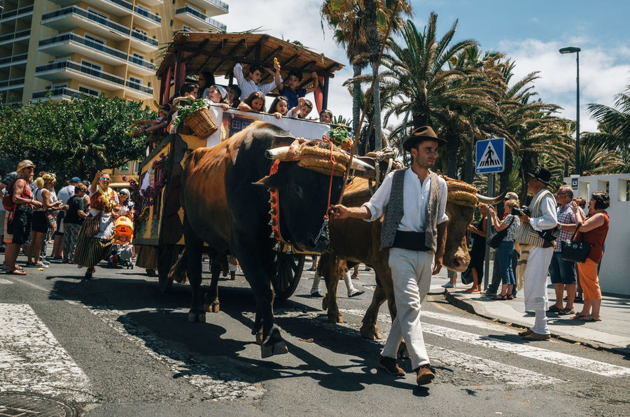 Puerto de la Cruz, Tenerife, Canary Islands, Spain. Decorated bull drawn wagon and Canarias people in traditional clothes participate in the parade. Tenerife celebrate the Day of the Canary Islands. Canarias Canary Islands Puerto De La Cruz SPAIN Traditional Culture Traditional Clothing Building Exterior Celebration Event Cow Day Domestic Animals Large Group Of People Lifestyles Livestock Mammal Mixed Age Range One Animal Outdoors People Real People Traditional Festival