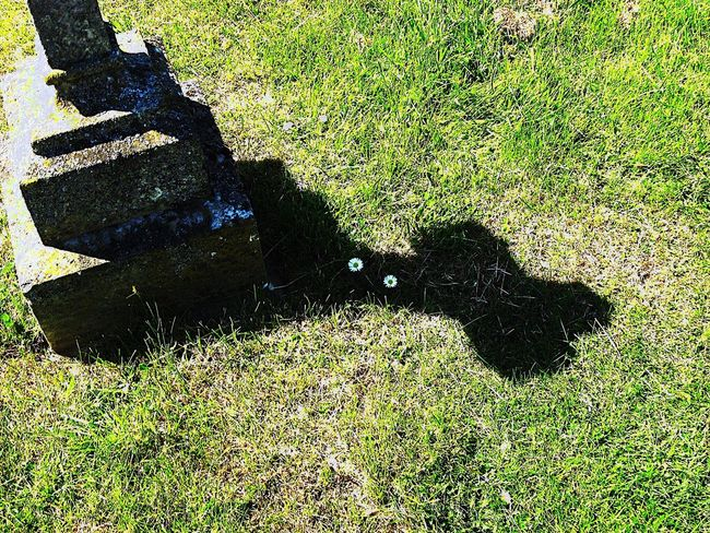 Grass Green Color Shadow Sunlight High Angle View Outdoors Growth Nature Day No People Close-up Low Section Cross Religion Grave Graveyard Gravestone EyeEm Gallery EyeEm Eyeemphotography Beauty In Nature Grass EyeEm Best Shots