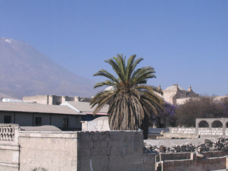 Architecture Arequipa Arequipa - Peru Building Exterior Built Structure Clear Sky Day House Monastary Monasterio De Santa Catalina Nature No People Outdoors Palm Tree Sky Tree