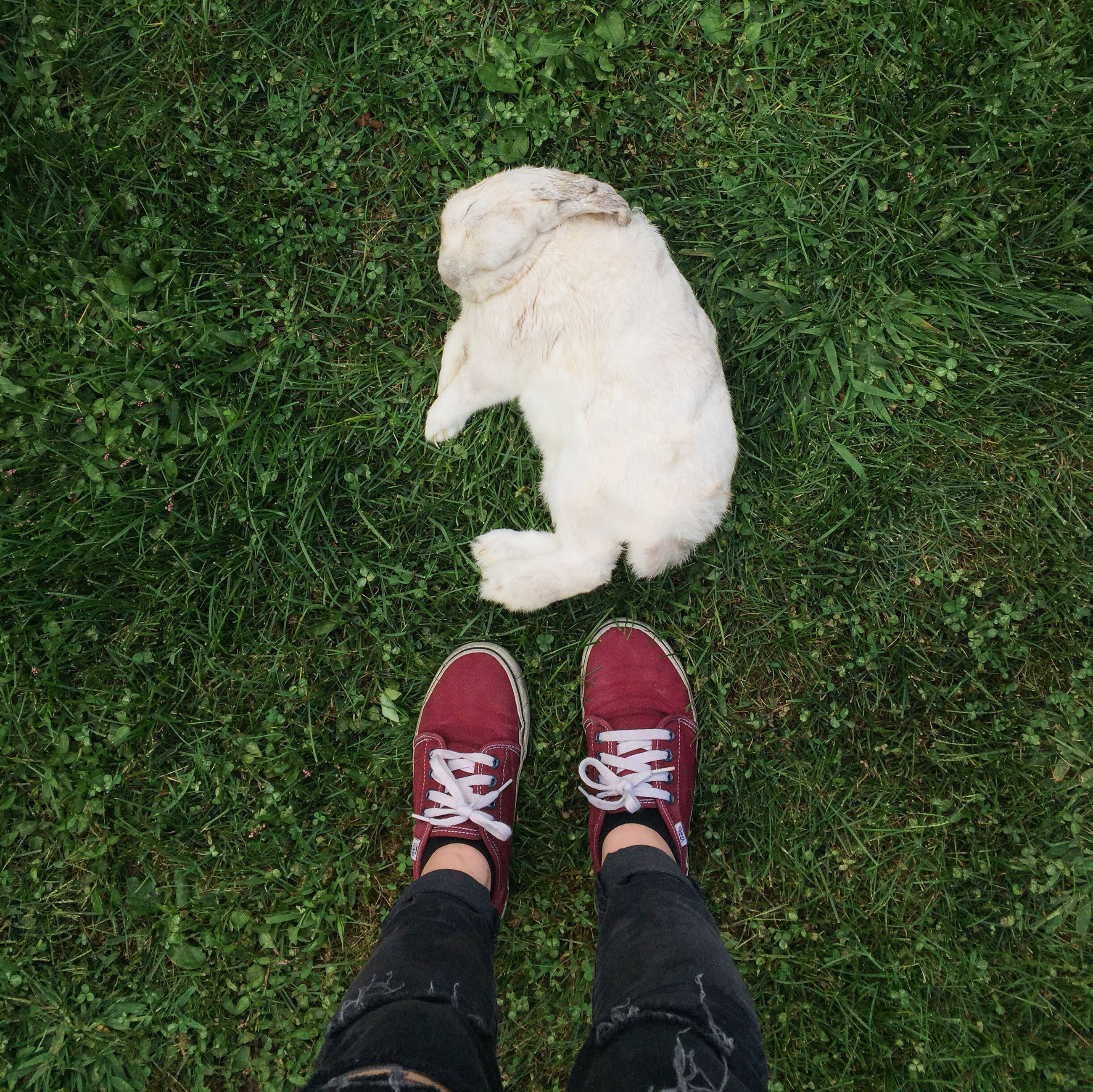 low section, person, shoe, grass, personal perspective, high angle view, standing, grassy, field, unrecognizable person, human foot, footwear, pets, directly above, lifestyles, green color, leisure activity