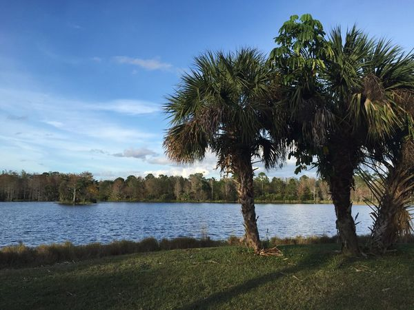 River park River Riverside Nature Photography Nature_collection Palm Trees Palm Tree Nature Park Tree Water Lake Nature Tranquil Scene Scenics Beauty In Nature Tranquility Sky Day Outdoors Landscape Tree Trunk Growth