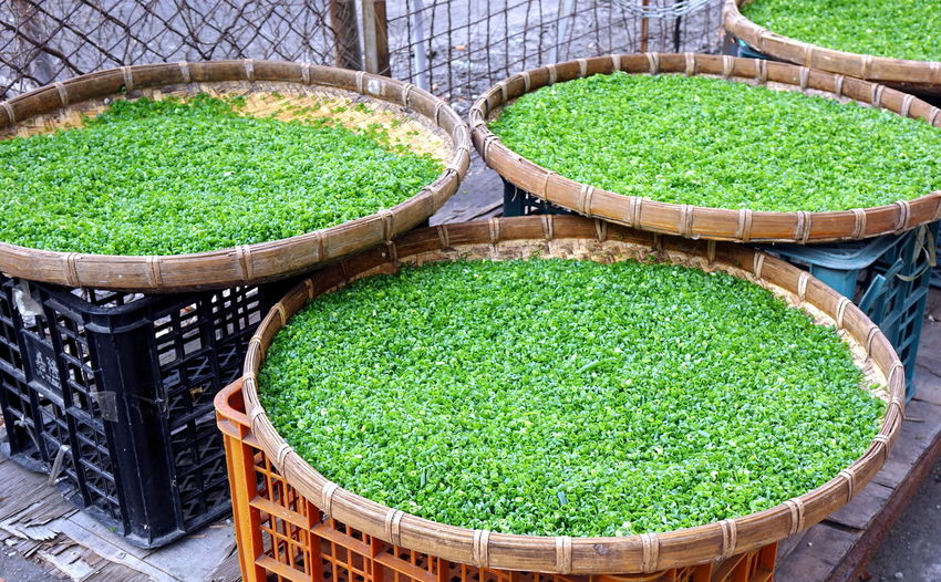 Freshly chopped chives or scallions dry in the sun. Vegetable Basket Market Green Color Chives Scallion Shallot Spring Onion Chinese Onion Chopped Drying In The Sun Bamboo Tray Food Ingredient