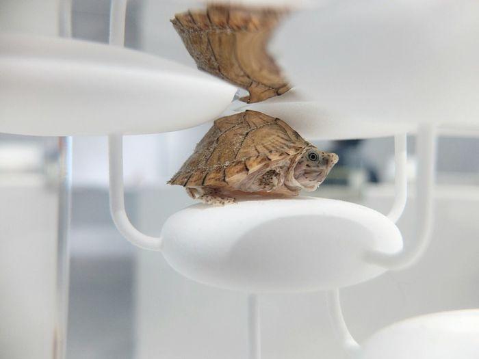 Waterscape Exhibition ArtWork Fine Art 三澤 遙 Turtle Animals