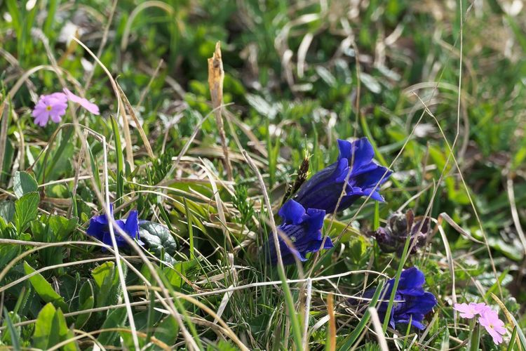 Flower Plant Flowering Plant Purple Fragility Vulnerability  Beauty In Nature Petal Growth Blue Nature Freshness Inflorescence Land Crocus Flower Head Close-up Day No People Springtime