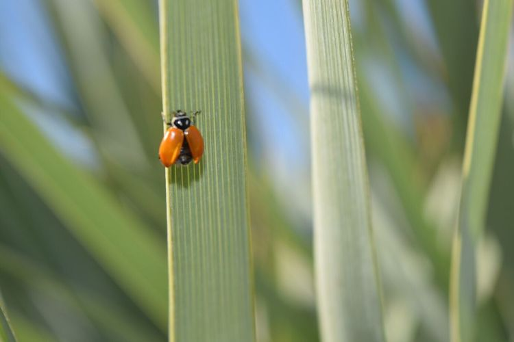 Bokeh Bokehlisious Focused Bug Lady Bug Fly Wings Action Closeup California SoCal Plant Ready Go Happy Red Green