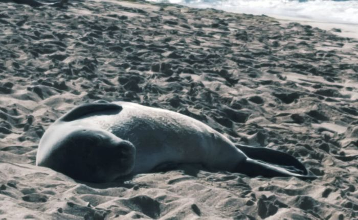 Seal Sealife Travels Beach Beach Lounge Beachphotography Animals In The Wild I'm making new friends