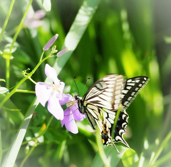 今日も笑顔で☺ Springtime アゲハ蝶 蝶々 Butterfly Butterfly Collection Butterfly - Insect Insect Collection Taking Photos 日だまり My Point Of View Eyemphotography EyeEm Nature Lover EyeEm Gallery EyeEm Best Shots Beauty In Nature EyeEm Best Shots - Nature
